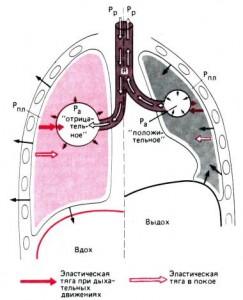 Альвеолярное давление