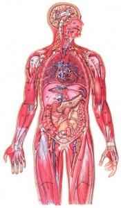 Компенсация снижения венозного притока к сердцу