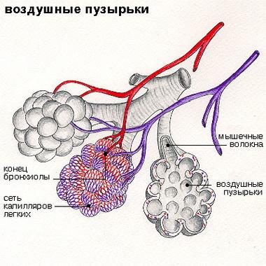 Формы дыхательных расстройств