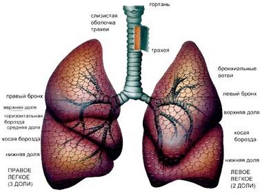 Чрескожная транстрахеальная вентиляция легких