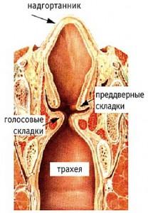 Разрез трахеи