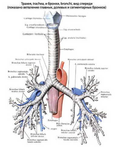 Обтурация инородным телом